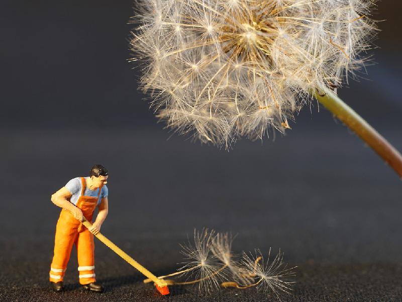 Limpieza general para evitar plagas de ratones